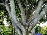 Tree of Embrace
