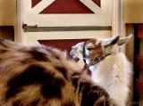Pensive Llama