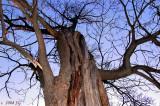 Sorcering Elm