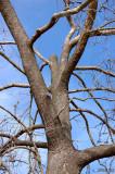 Arterial Branching