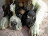 like cat and dog