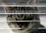 z-cat`s look