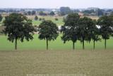 2008-08-11_176.jpg