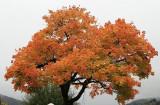 kwt_2008-10-03_029.jpg