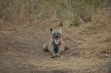 Hyena Pup 2