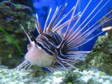 L'épineux poisson