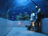 Dans le tunnel de verre