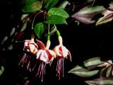 trois superbes fleurs