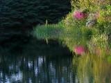 L'étang plié
