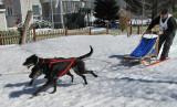 deux chiens noirs