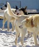 chiens chiens chiens