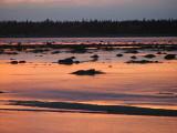 les canards du coucher du soleil