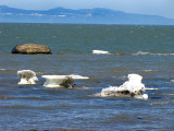 petits icebergs