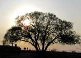 L'arbre à la forteresse