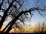 arbres en invasion