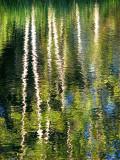les bouleaux blancs de l'étang de Métis
