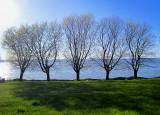 Cinq arbres bien enlignés