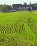 sillons verts la maison centenaire