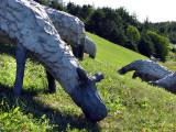 Les moutons de Mont-Joli