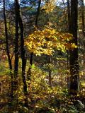 jaune couleur automne