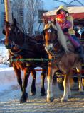 les chevaux de Charlesbourg