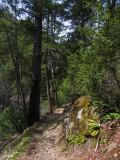 Kelsey Trail along Kelsey creek