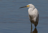 Birds - Sandhill Cranes & Egrets