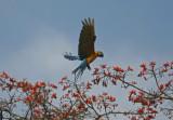 birding_trip_to_darien_panama_feb_2010