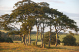 13th July 2009  circle of trees