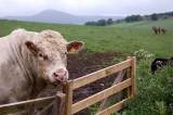9th June 2010  bull