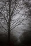 21st November 2007  Rain
