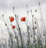 Arnoldas Jurgaitis Photography > Around the world of herbs
