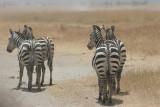 Tanzania, Safari - Oktober 2006 - 1045