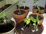 seedlings 014.jpg