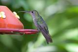 _MG_9363_Green-and-White Hummingbird.jpg