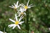 Wild Flowers, Grand Teton