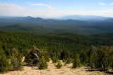 Forest east of Crater Lake