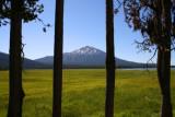 Mt Batchelor