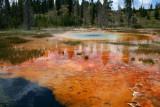 Colourful Pools at Yellowstone