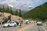 Wild sheep on Highway 93