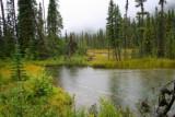 Wetland near Jasper