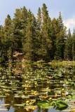 6752 nymph lake.jpg