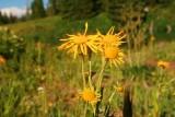 7056 wildflower stillwater.jpg