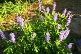 7088 stillwater wildflowers.jpg
