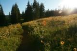 7091 wildflower sunny meadow.jpg