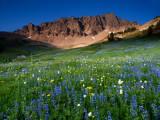 P8044332 Alpine Meadow in the Goat Rocks Wilderness.jpg