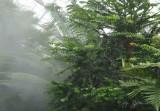 Rain Forest Washington DC Botanical Garden