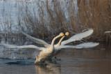 Vogelfoto's