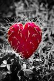 Love Hurts  (RD-589)
