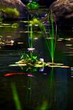 Garden pond RD-594